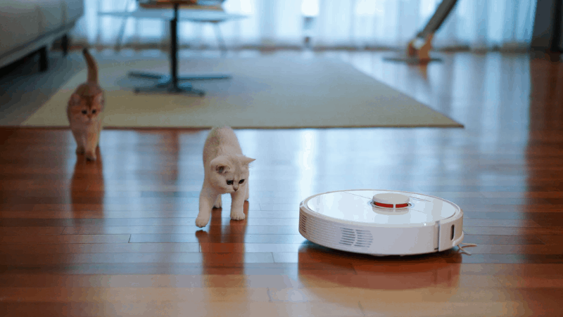 Two kittens curious about a robotic vacuum. The vacuum is white and is cleaning up a hard wood floor while one cat is fearfully stepping away.