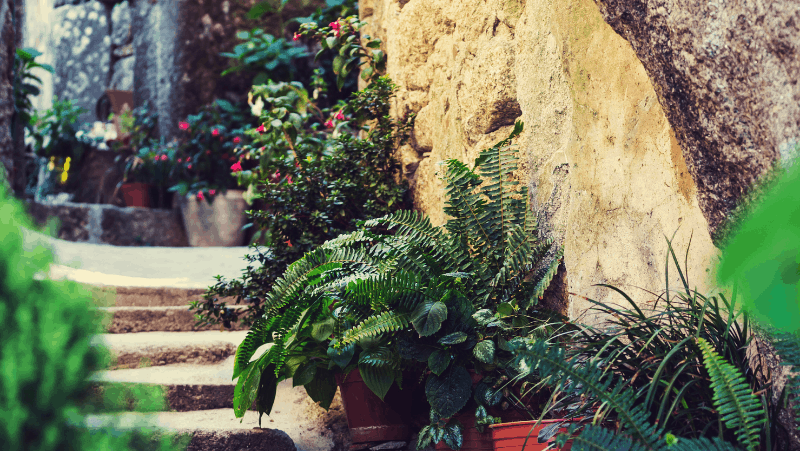 Decorative image of a garden with the best plants to grow for beginners